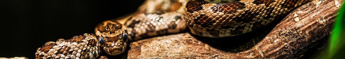 Schlange auf einem Ast