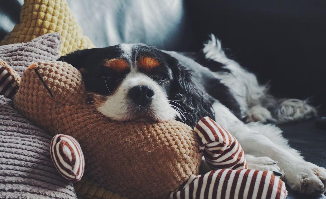 Burnout Prophylaxe - Hund schläft auf dem Sofa
