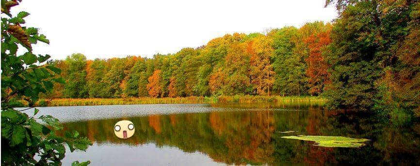 Angst kann hilfreich sein - ein Badesee mitten im Wald