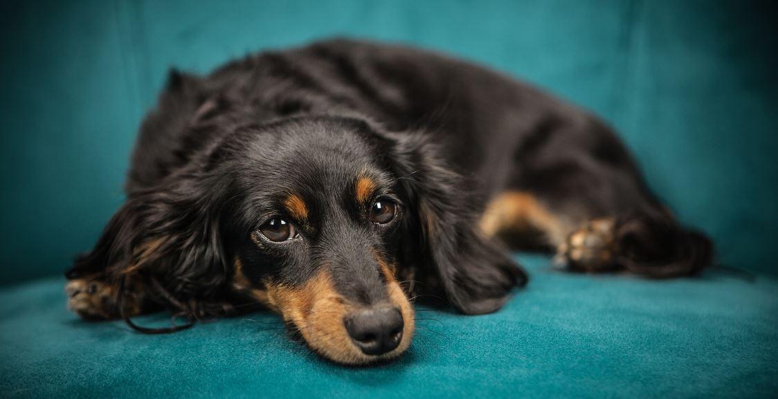 Entscheidungen haben Konsequenzen - fauler Hund auf dem Sofa